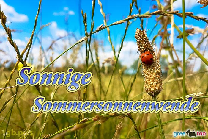 Marienkaefer Sonnige Sommersonnenwende Bild - 1gb.pics