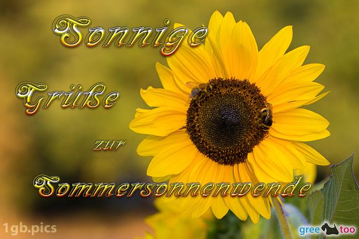 Sonnenblume Bienen Zur Sommersonnenwende Bild - 1gb.pics