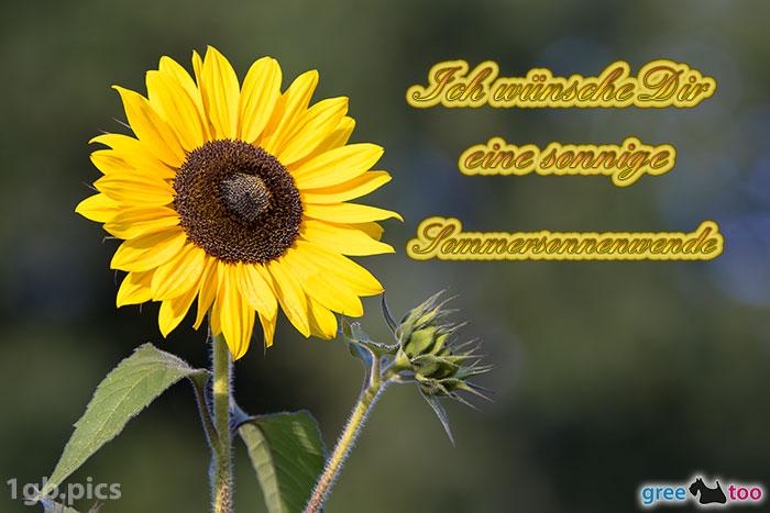 Sonnenblume Eine Sonnige Sommersonnenwende Bild - 1gb.pics