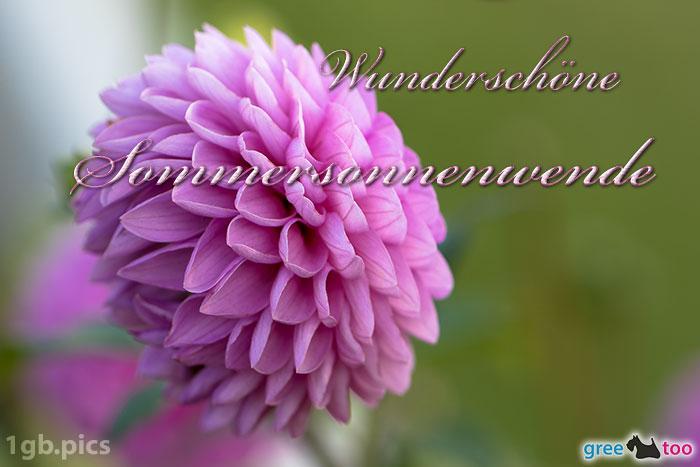 Lila Dahlie Wunderschoene Sommersonnenwende Bild - 1gb.pics