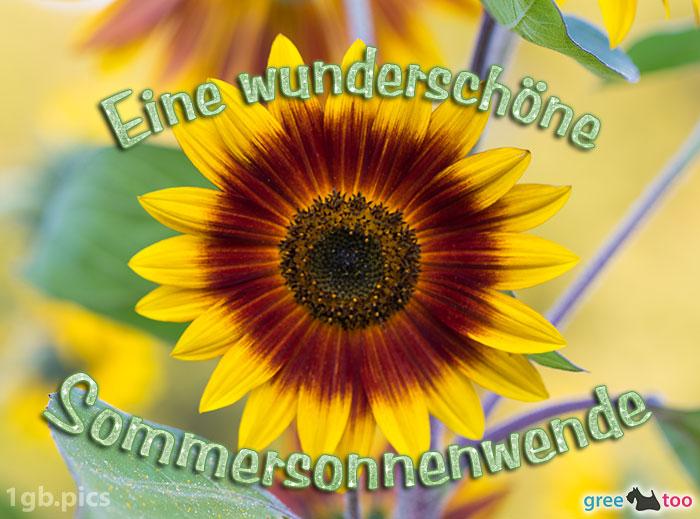 Sonnenblume Eine Wunderschoene Sommersonnenwende Bild - 1gb.pics