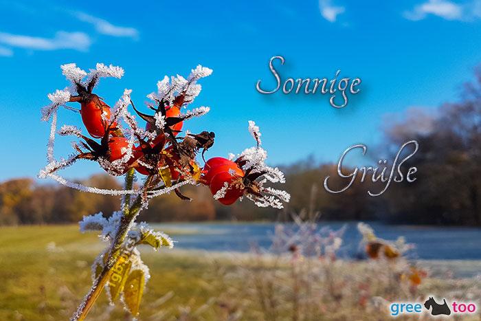 Sonnige Gruesse Bild - 1gb.pics