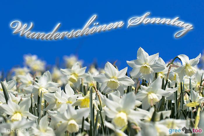 Wunderschoenen Sonntag Bild - 1gb.pics