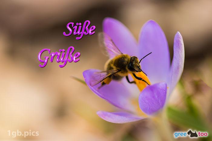 Krokus Biene Suesse Gruesse Bild - 1gb.pics