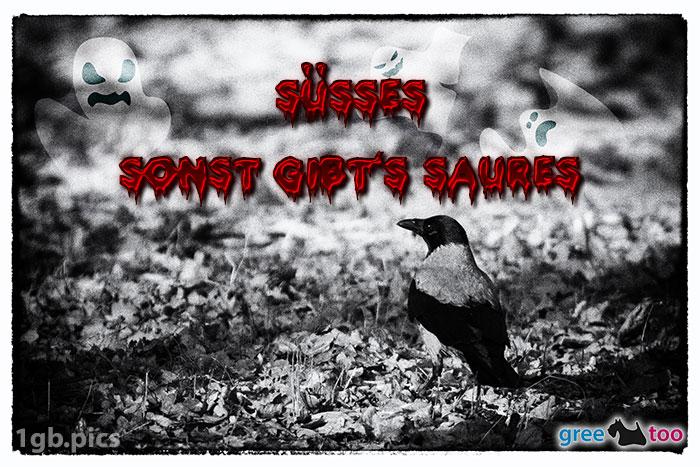 Kraehe Suesses Sonst Saures Bild - 1gb.pics