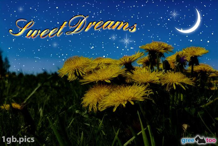 Loewenzahn Sweet Dreams Bild - 1gb.pics