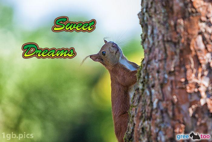 Eichhoernchen Sweet Dreams Bild - 1gb.pics
