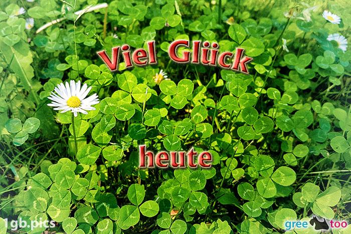 Klee Gaensebluemchen Viel Glueck Heute Bild - 1gb.pics