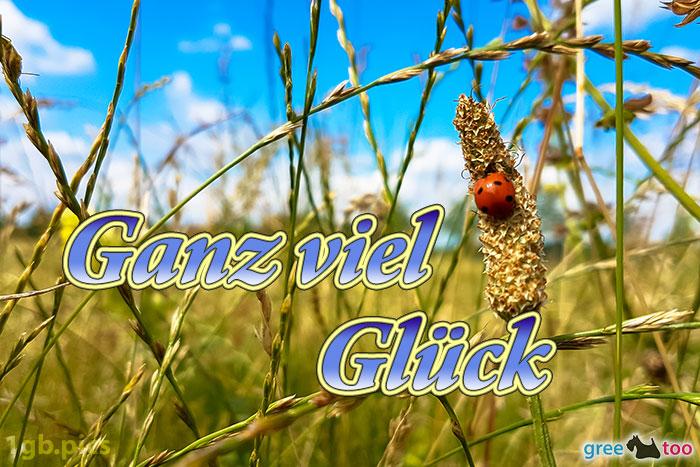 Marienkaefer Ganz Viel Glueck Bild - 1gb.pics