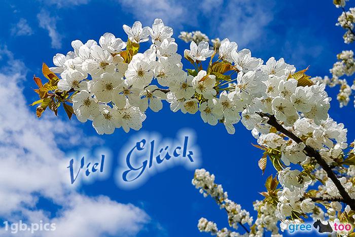 Kirschblueten Viel Glueck Bild - 1gb.pics