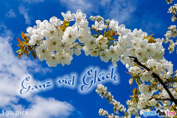 Kirschblueten Ganz Viel Glueck Bild - 1gb.pics