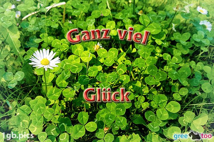 Klee Gaensebluemchen Ganz Viel Glueck Bild - 1gb.pics