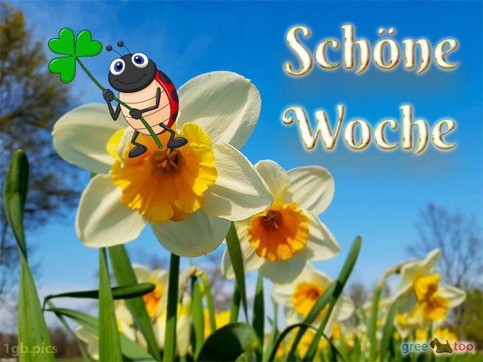 Schoene Woche Bild - 1gb.pics