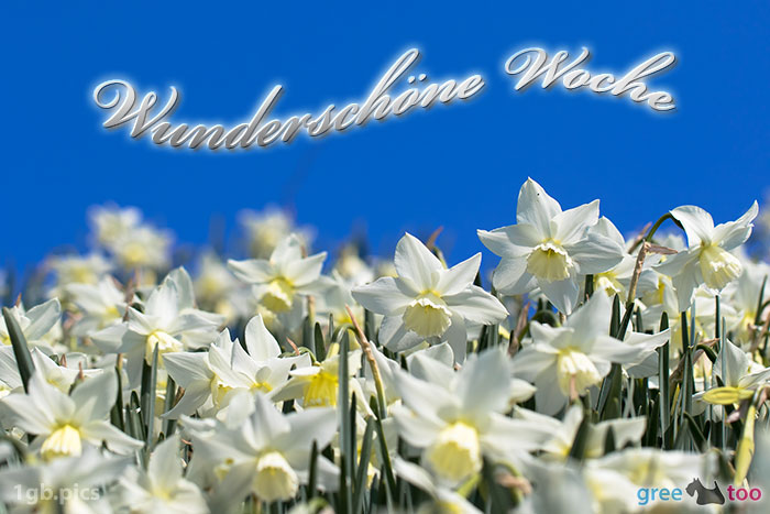 Wunderschoene Woche Bild - 1gb.pics