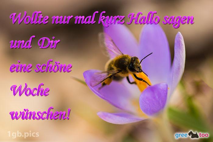 Krokus Biene Eine Schoene Woche Bild - 1gb.pics