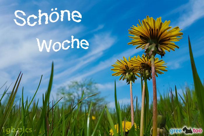 Loewenzahn Himmel Schoene Woche Bild - 1gb.pics