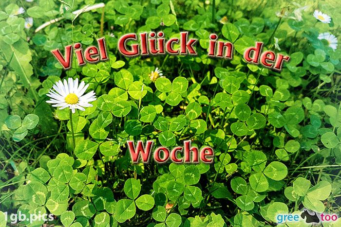 Klee Gaensebluemchen Viel Glueck In Der Woche Bild - 1gb.pics