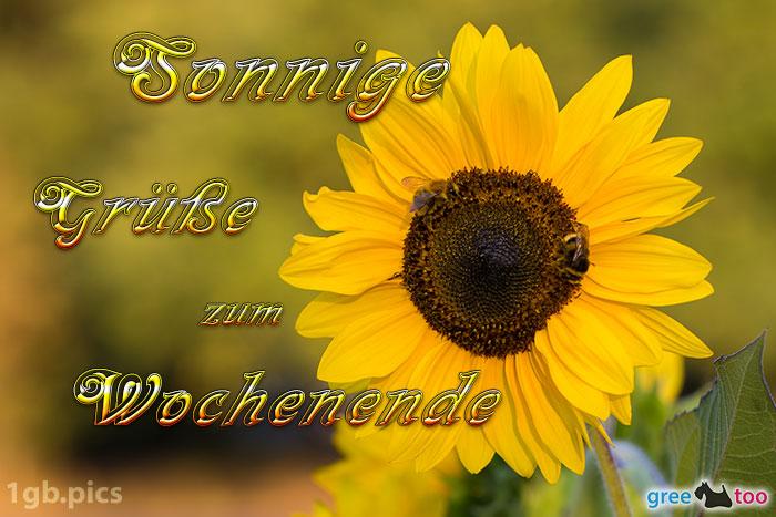 Sonnenblume Bienen Zum Wochenende Bild - 1gb.pics