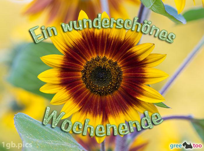 Sonnenblume Ein Wunderschoenes Wochenende Bild - 1gb.pics