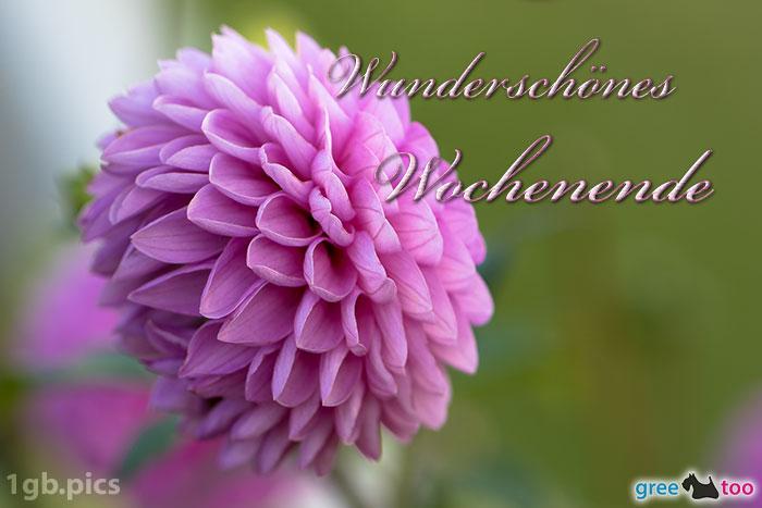 Lila Dahlie Wunderschoenes Wochenende Bild - 1gb.pics
