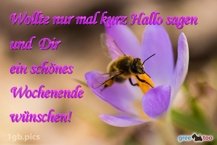 Krokus Biene Ein Schoenes Wochenende Bild - 1gb.pics
