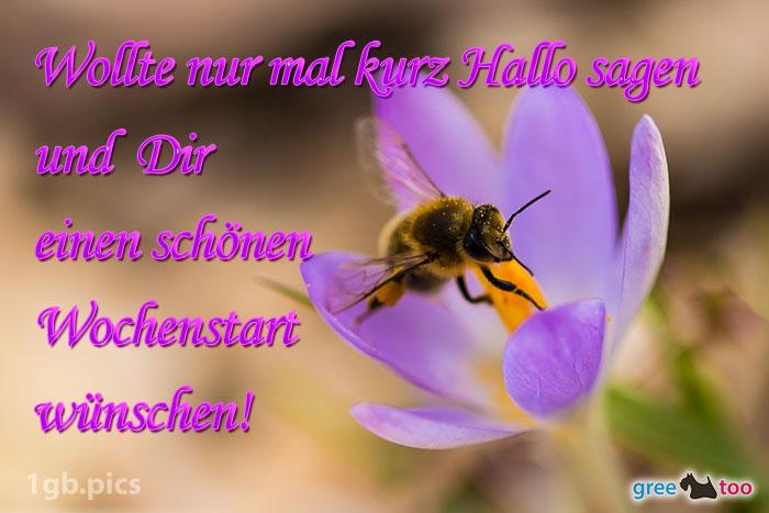 Krokus Biene Einen Schoenen Wochenstart Bild - 1gb.pics