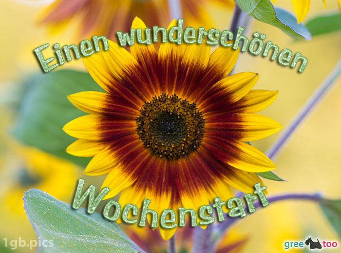 Sonnenblume Einen Wunderschoenen Wochenstart Bild - 1gb.pics