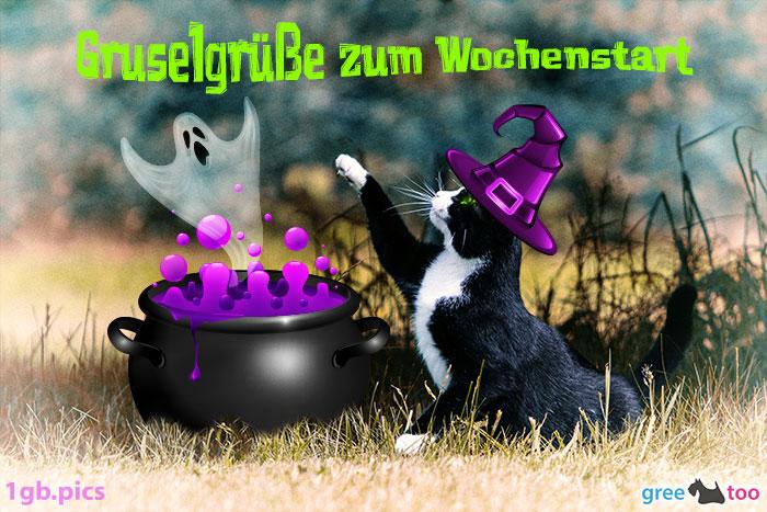 Katze Gruselgruesse Zum Wochenstart Bild - 1gb.pics