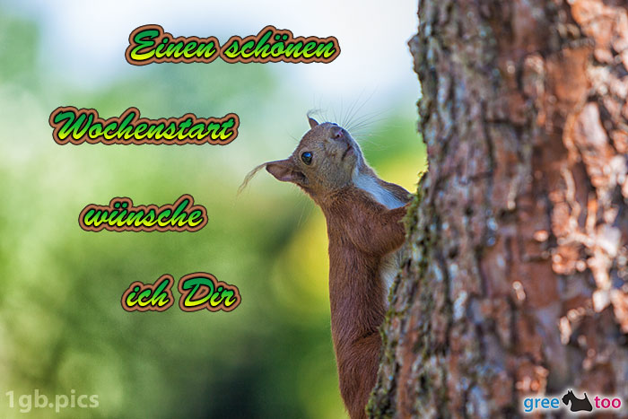 Eichhoernchen Einen Schoenen Wochenstart Bild - 1gb.pics