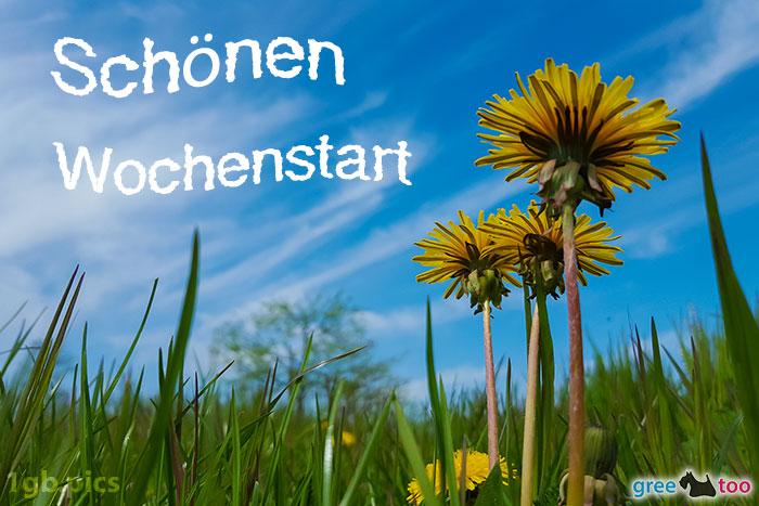 Loewenzahn Himmel Schoenen Wochenstart Bild - 1gb.pics