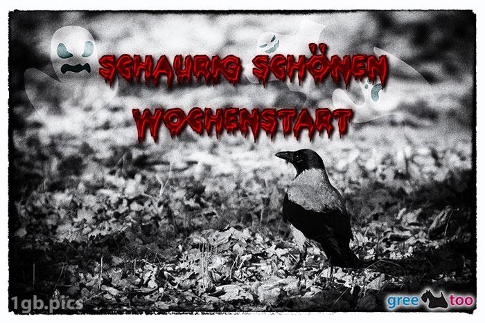Kraehe Schaurig Schoenen Wochenstart Bild - 1gb.pics