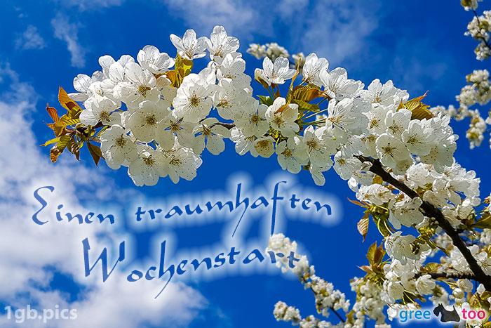 Kirschblueten Einen Traumhaften Wochenstart Bild - 1gb.pics
