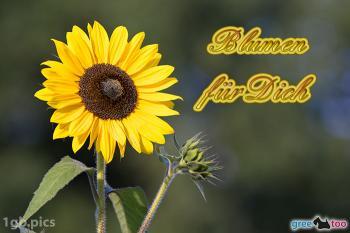 Blumen für dich Bilder