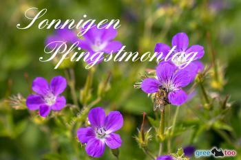Pfingstmontag Bilder