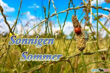 Sommer Bilder